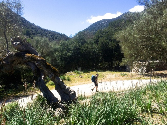 Tramuntana Rute de Pedra en sec Trockenmauerweg